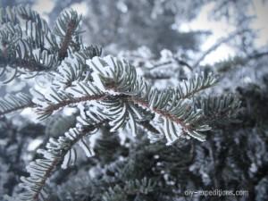 winter-tanne
